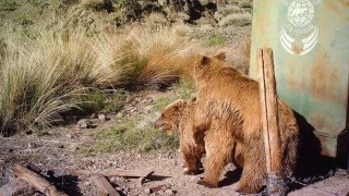 Gobi bear movie - On the tracks of the Gobi Bear - Mission with Harry Reynolds