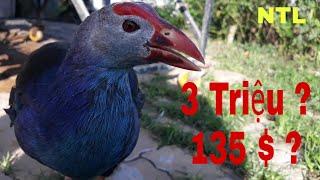 Tham Quan Tiệm Chim Cảnh Khủng Có Gì ? / Largest Ornamental Bird Shop In Vietnam