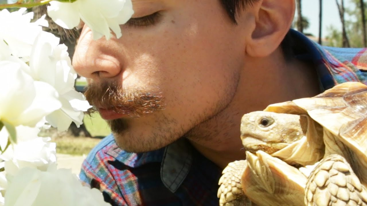 If A Tortoise Was Your BFF thumbnail