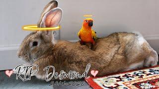 Remembering Desmond the Giant Bun (2014-2020)