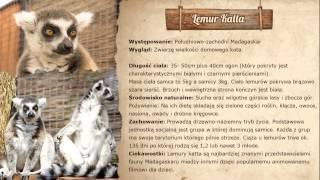 Zoo Intro Full Hd
