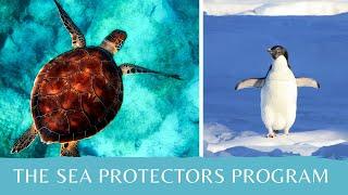 DIY Sea Protectors Crafts   Girl Scout Gold Award