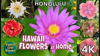 Hawaii Flowers At Home