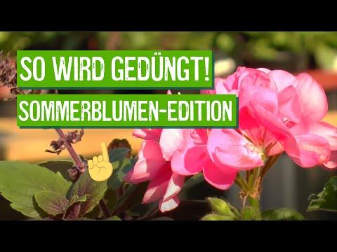 Sommerblumen richtig pflanzen und düngen - Der Grüne Tipp