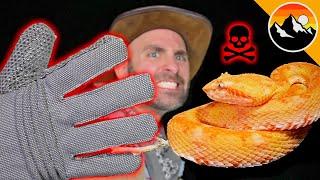BITE PROOF? Venomous Snake vs. Gloves!