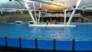 preview picture of video 'Iran - Kish Island - Dolphin park'
