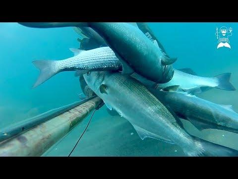 Il prodotto fatto in casa si ferma per ristorarsi per pescare dalle mani