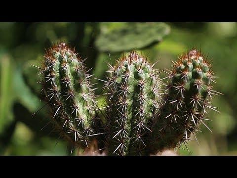 Duas Barras: conheça um sítio que é referência no cultivo de cactos e suculentas