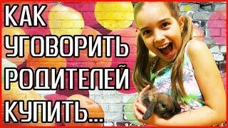 КАК УГОВОРИТЬ РОДИТЕЛЕЙ КУПИТЬ ДОМАШНЕЕ ЖИВОТНОЕ! Видео для детей. Как уговорить купить кролика!