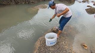 阿雄用鲈鱼扣做陷阱把水坑围住,退潮后抓的全是海鲜硬货,太过瘾了