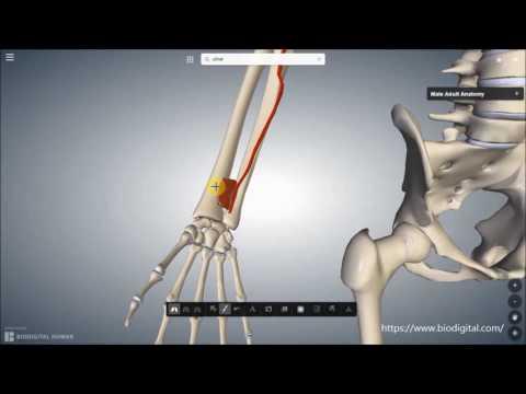 Schmerzen im Nacken während sitzender Tätigkeit