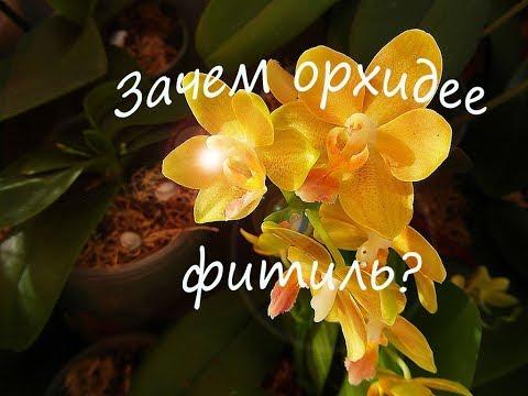 Всё про фитиль.  Орхидеи на фитиле.