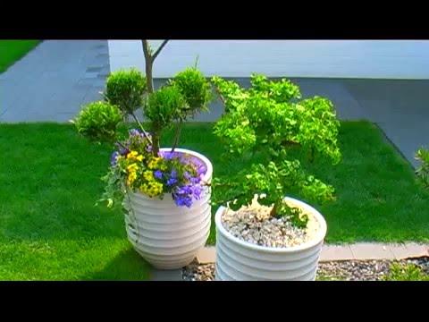 Topfpflanzen mit Blähton richtig nutzen