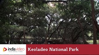 Scenic Beauty of Keoladeo National Park