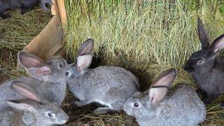 Содержание кроликов. Фермерское хозяйство Виктора Катанаева