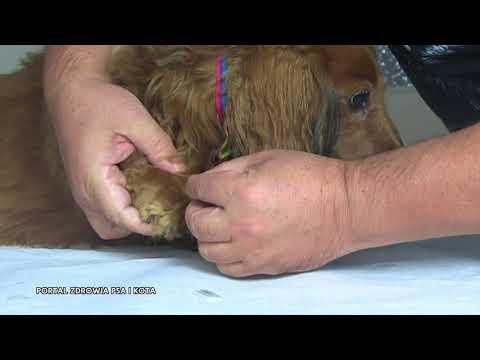 Leczenie kolana liliowy