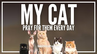 Prayer For Cats   Prayers For Cat Healing, Health, and Blessing
