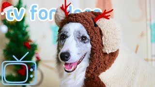 Xmas TV for Dogs! Step Into Christmas Classing Relaxing Dog Music & TV