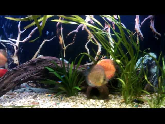 200l. Discus Fish Tank