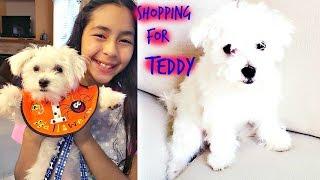 Shopping For Teddy Cute Funny MaltesePuppy | B2cutecupcakes