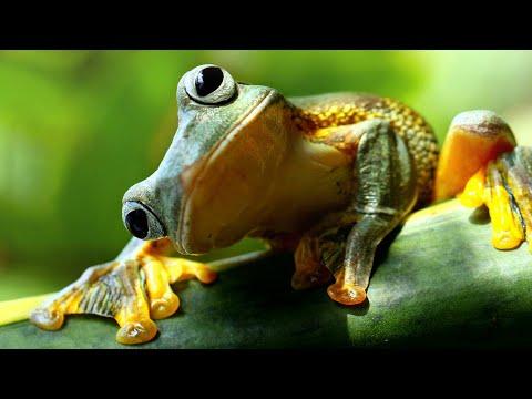 L'ASCENSEUR ÉMOTIONNEL ! | Frog Climbers (ft. Seldell)