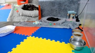 Kitkat Playroom LIVE: Eve's Eves