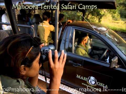 Mahoora Experience