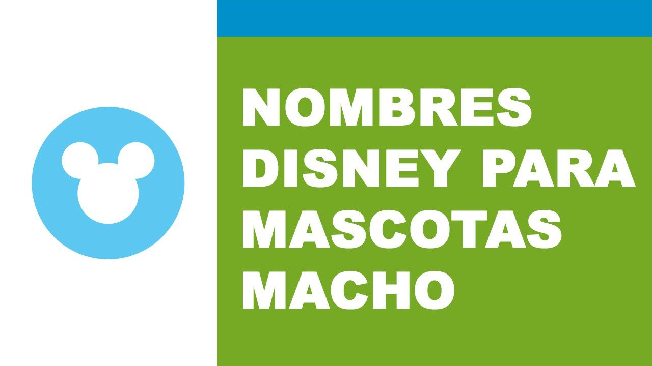Nombres disney de mascotas macho - los mejores nombres para mascotas - www.nombresparamimascota.com