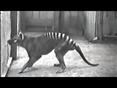 Rare Clips of Extinct Animals