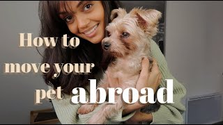 Tips on bringing your pet abroad! How I brought my dog from the US to France // *American in France