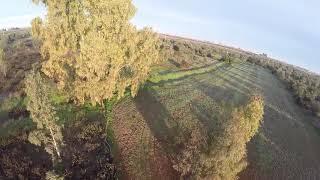 Volando El Árbol FPV - Tero Q215 Cinematic Drone