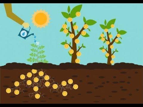 MoneyGardens Org-это экономический симулятор.