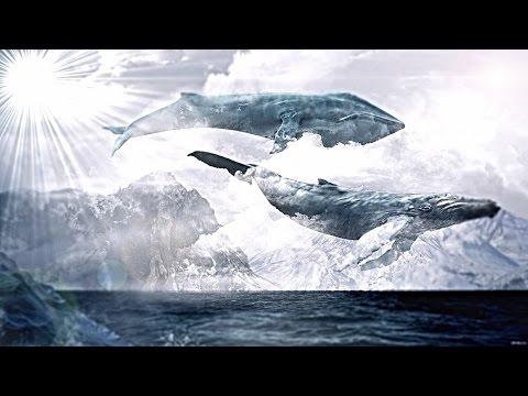 ЖК & SHAMAN – Синий кит