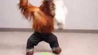 Смотреть онлайн Актерские будни орангутанга
