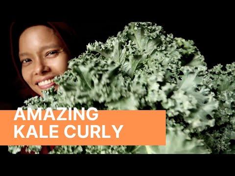Ep. 61 panen Kale curly, daunnya besar dan indah sekali