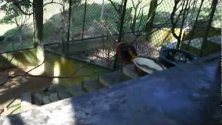 preview picture of video 'Paradise Farm at Ko Samui - Birds'