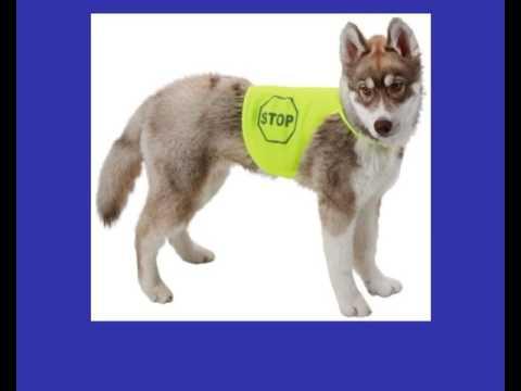 Sicherheitswesten für Hunde