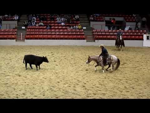 Cutting - czyli pokaz krowiego zmysłu konia