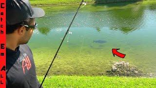 PLASTIC FOUND INSIDE the FISH! **BIG MISTAKE FISHING**