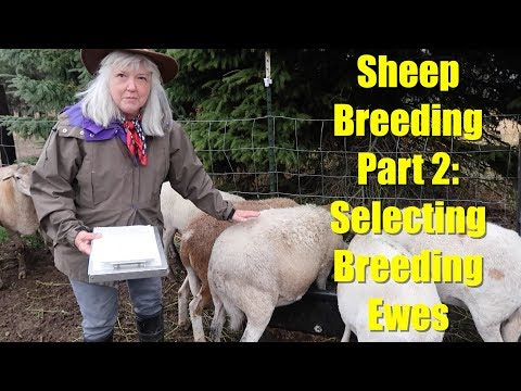, title : 'Sheep Breeding Series - Part 2: Selecting Ewes for Breeding