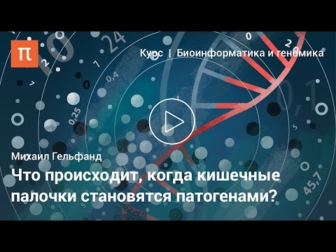 Ультразвуковые признаки диффузных изменений в предстательной железе