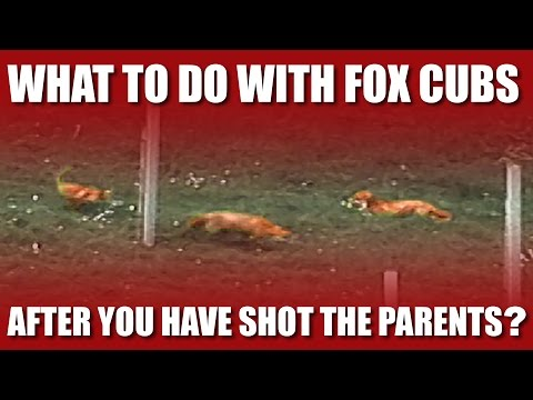 What about the fox cubs?