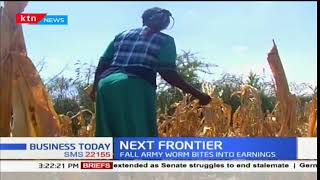 The Next Frontier: Fall Armyworms bite into farm earnings in Machakos