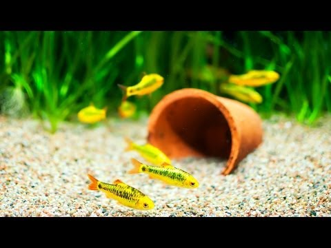 How to Pick Fish Tank Decorations | Aquarium Care