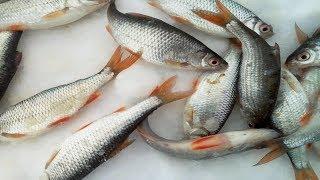 Рыбалка великие луки озера