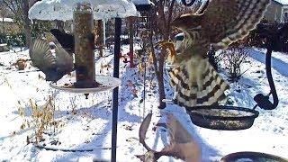 Bird Feeder 2 – Littlehouse on the Prairie