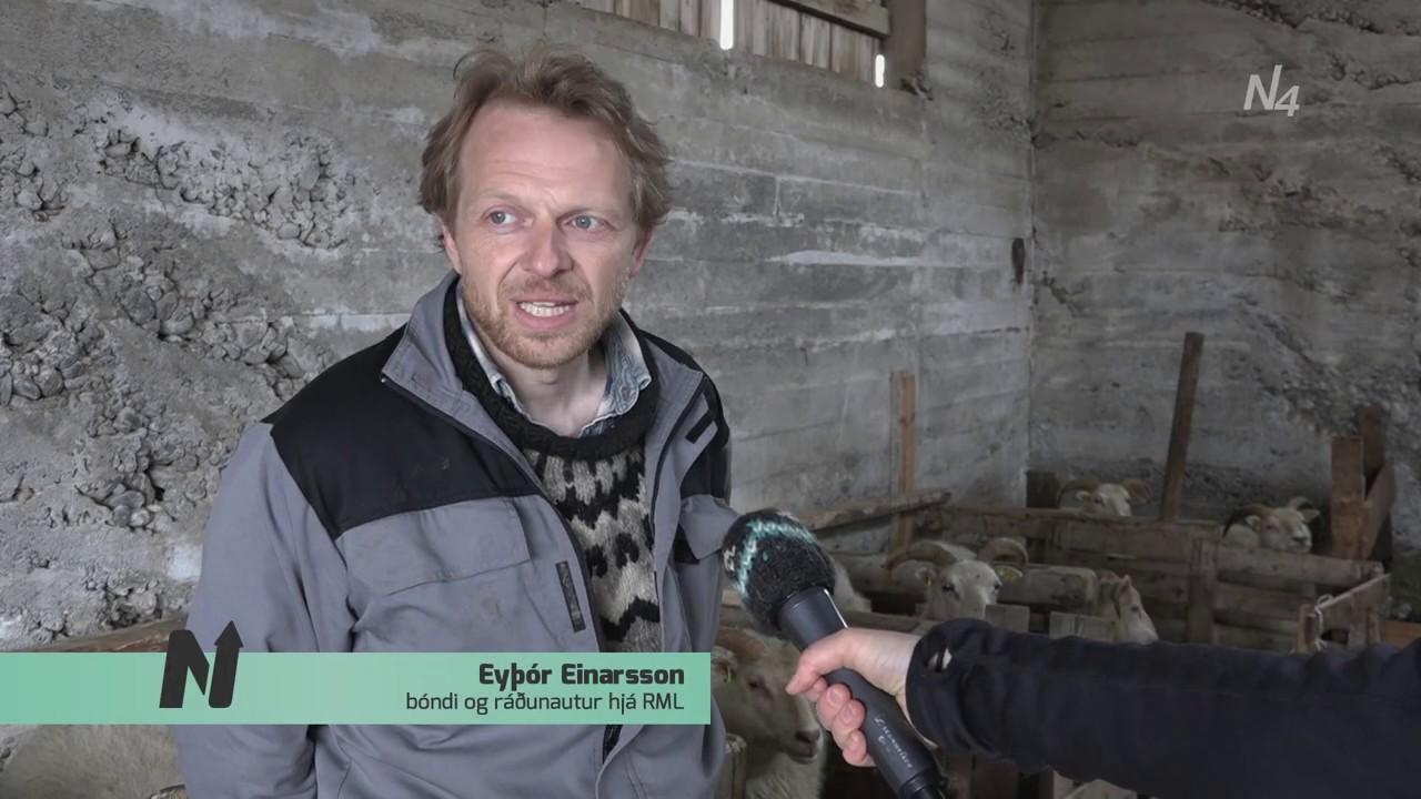 Sauðburður og sauðfjárræktThumbnail not found