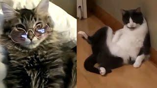 Spécial Tik-Tok chaton#Meilleures Vidéos Drôles de Chat et de Chien 🐶🐱- Best Funny DOGS et CATS #134