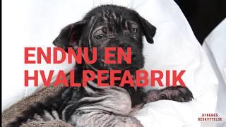 17 hunde fundet på hvalpefabrik