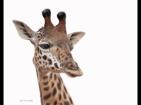 Thumbnail of Emilys Giraffe